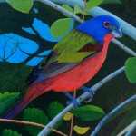 THP Painted Bunting 53 4x6 PC